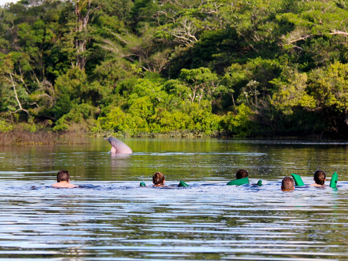 Swimming with wild dolphins along birding expedition Amazon Peru