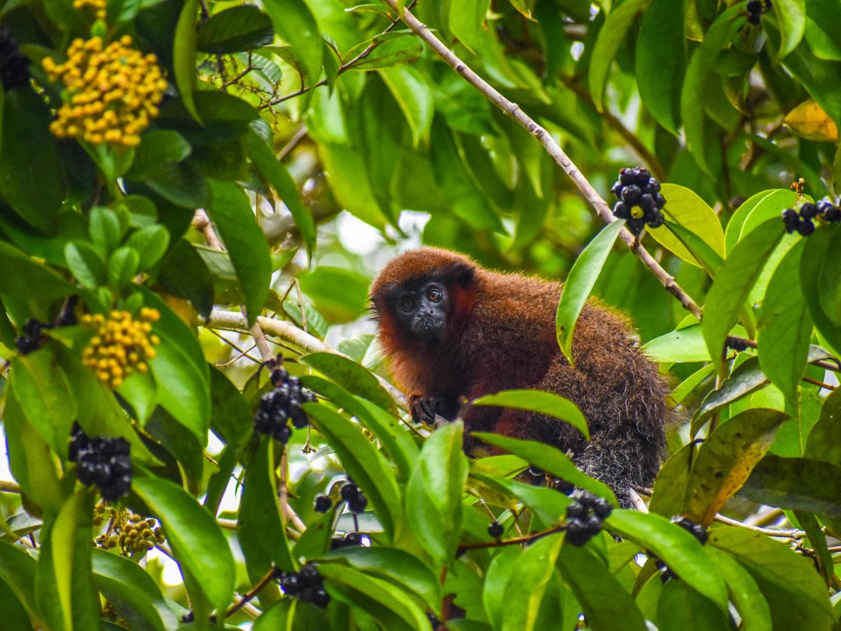 Peruvian Amazonia wildlife monkey rainforest fishing expedition Peru