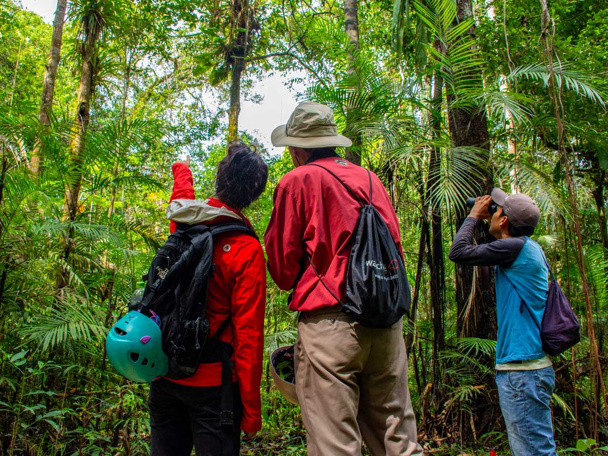 Amazon general tour rainforest wildlife spotting Peru