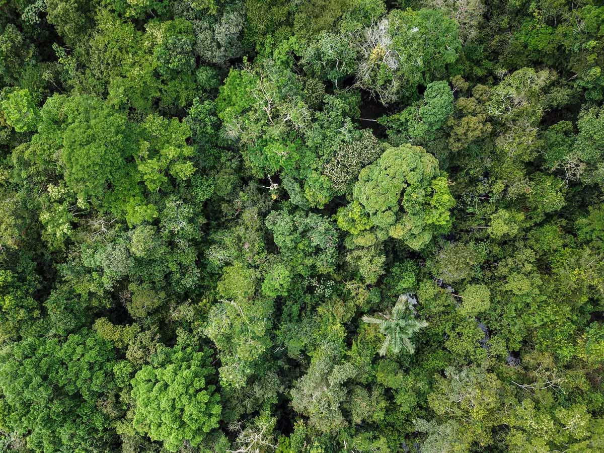 Rural Peruvian Amazonia jungle forest research tour in Peru