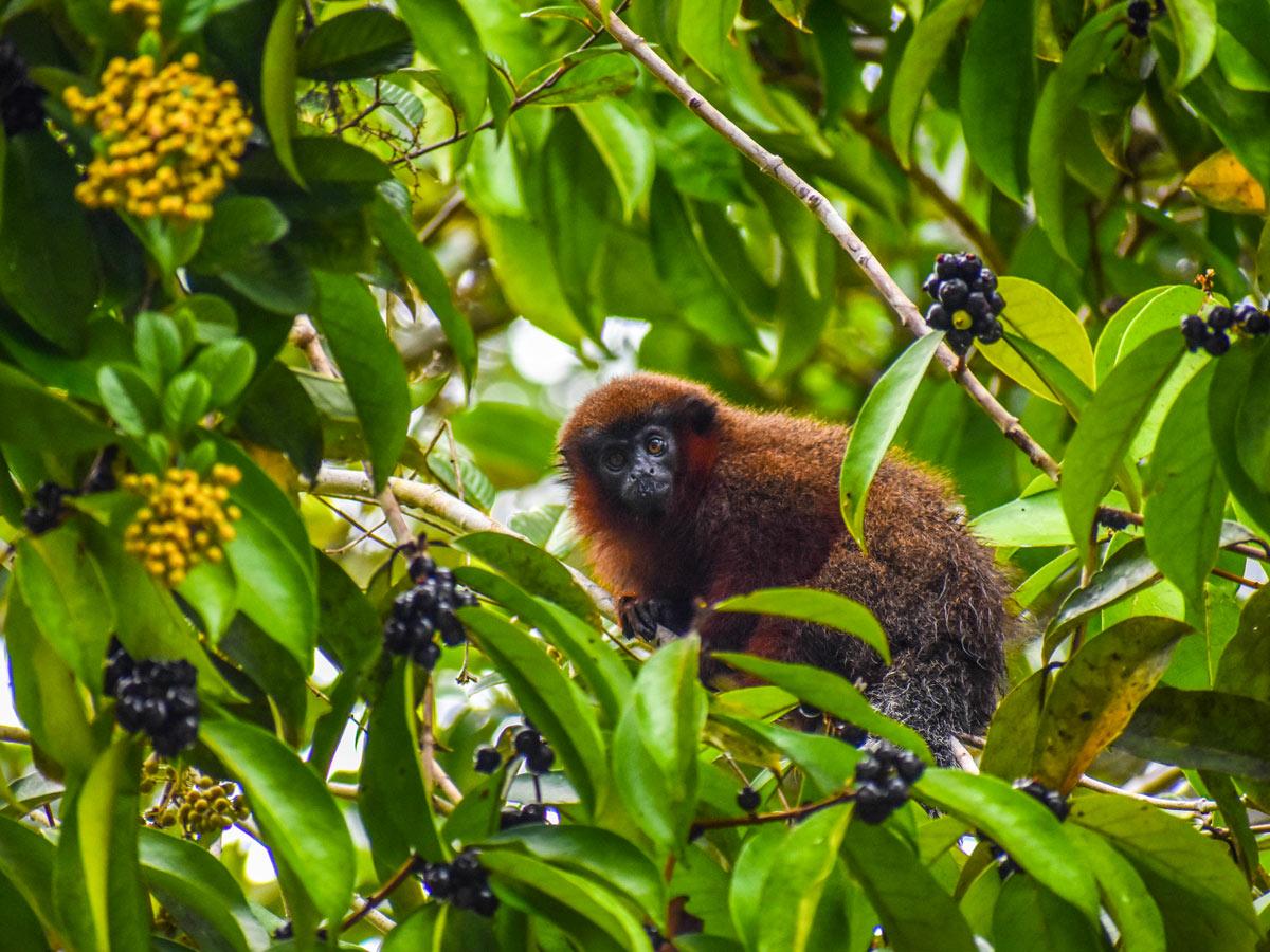 Peruvian Amazonia research center wildlife nature research Peru