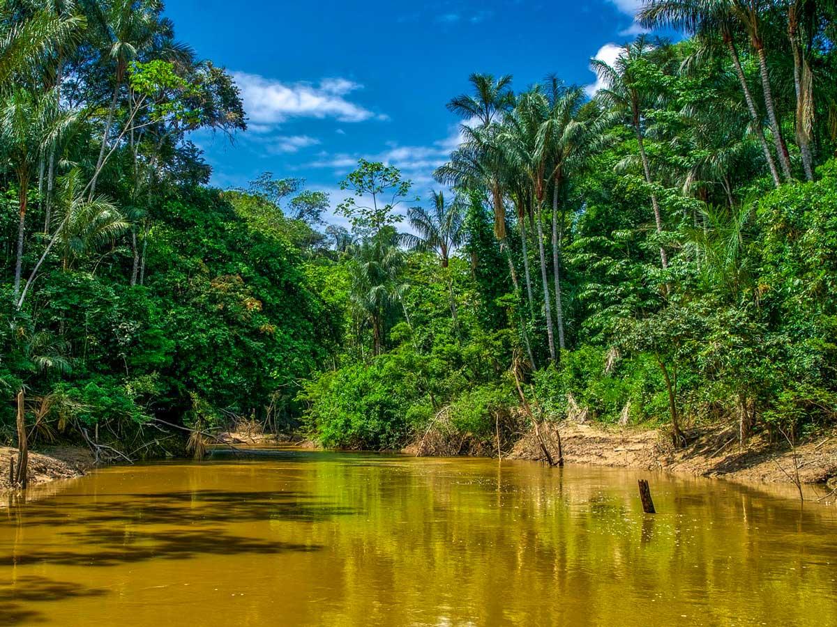 Lush Amazon jungle Peruvian Amazonia rainforest survival training expedition