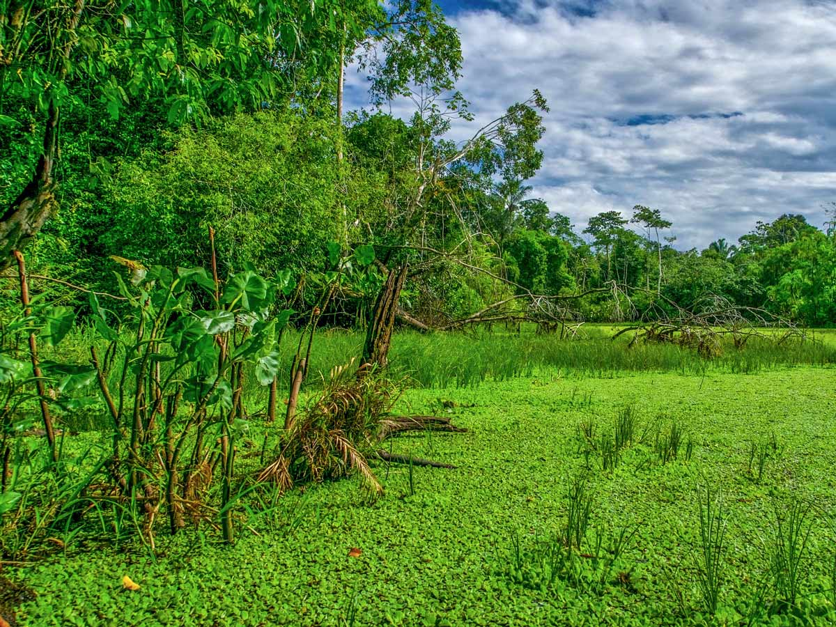 Green jungle marsh swamp Peruvian Amazonia survival training expedition