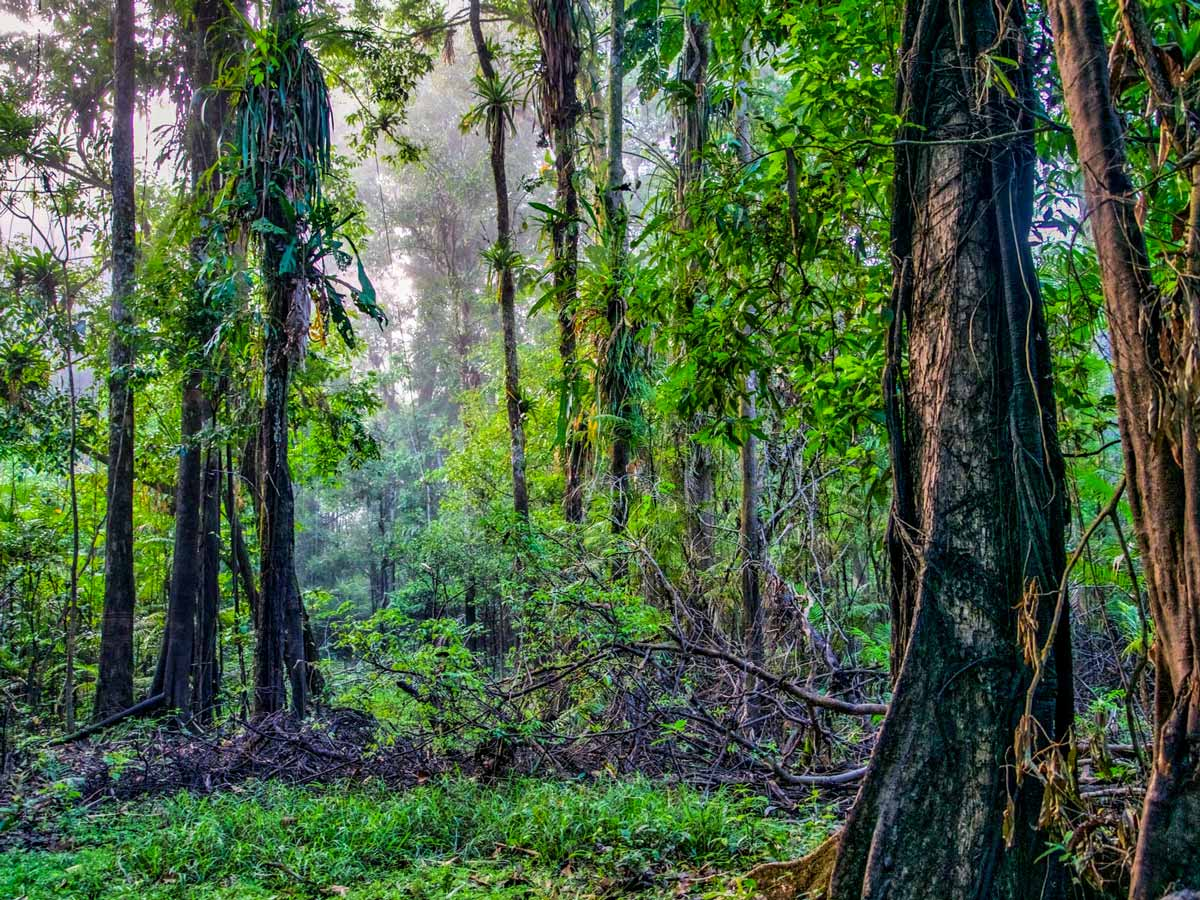 Natural jungle vines Peruvian Amazonia survival training expedition