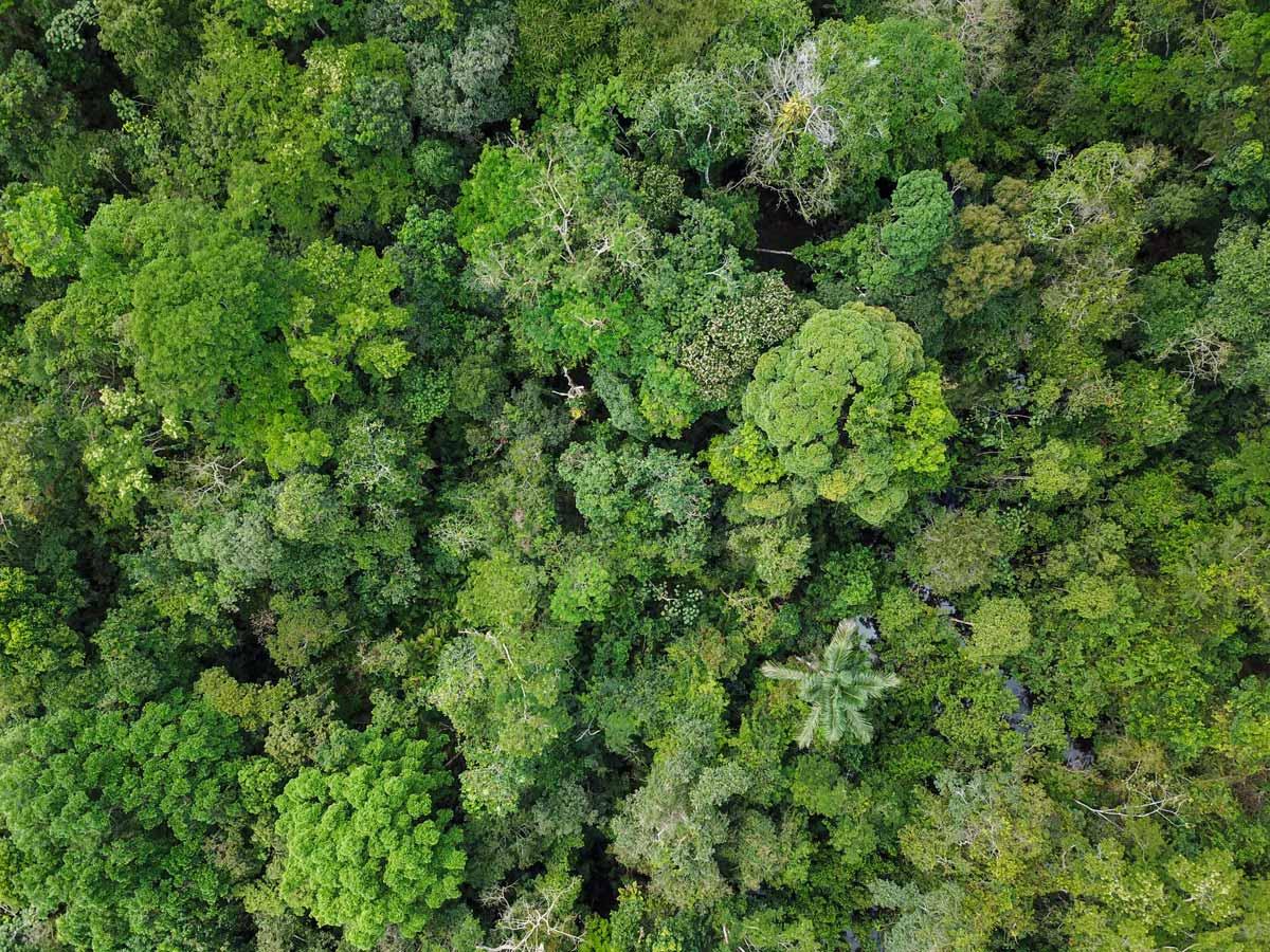 Tropical jungle rainforest vegetation Amazonia survival training expedition