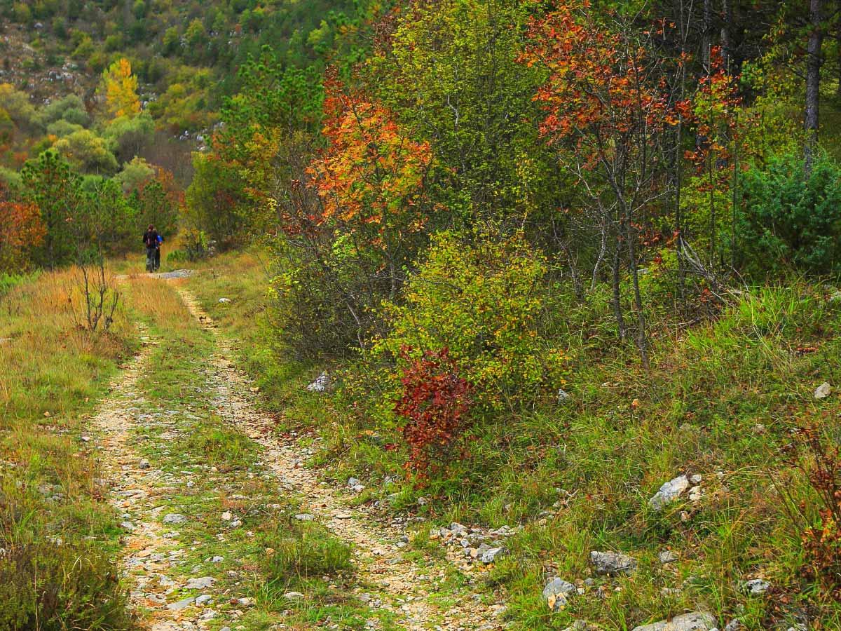Forest hiking walking trails mediterranean