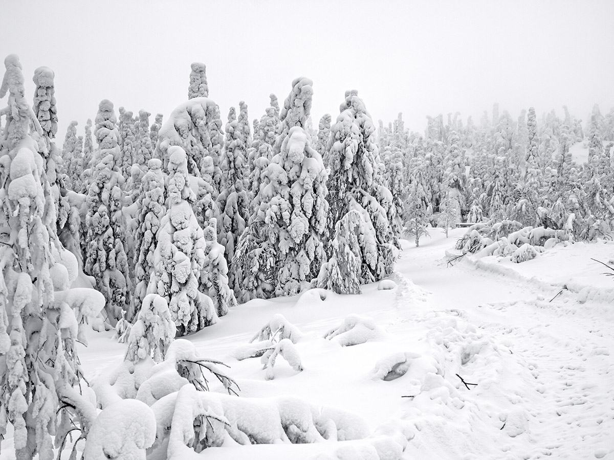 Karelia multi sport tour in Russia takes place in winter when whole Karelia is covered by white snow