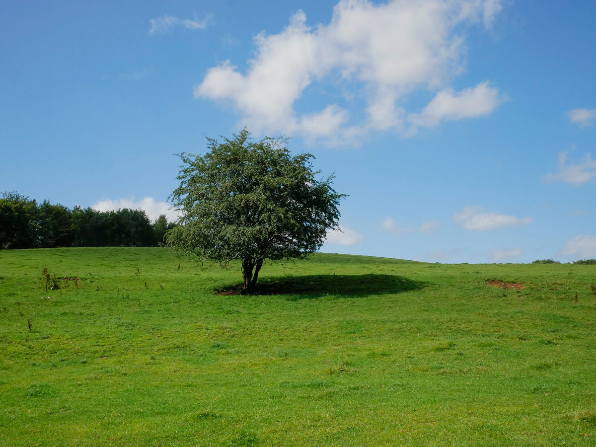 Cotswold England pasture fields tree blue sky