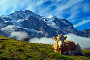 Hiking Adventure in the Swiss Alps