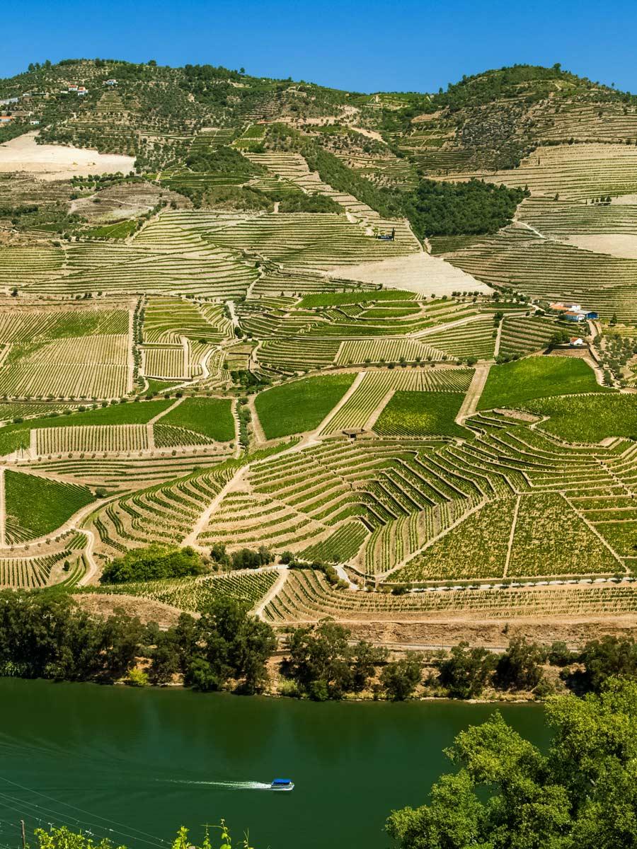 Farmland vineyards Portugal bike tour Duoro Valley