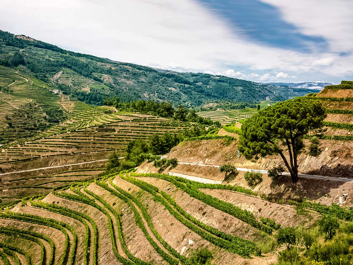 Tiered terraced farm crops Portugal bike tour Duoro Valley