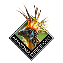 Amazonia Expeditions Logo