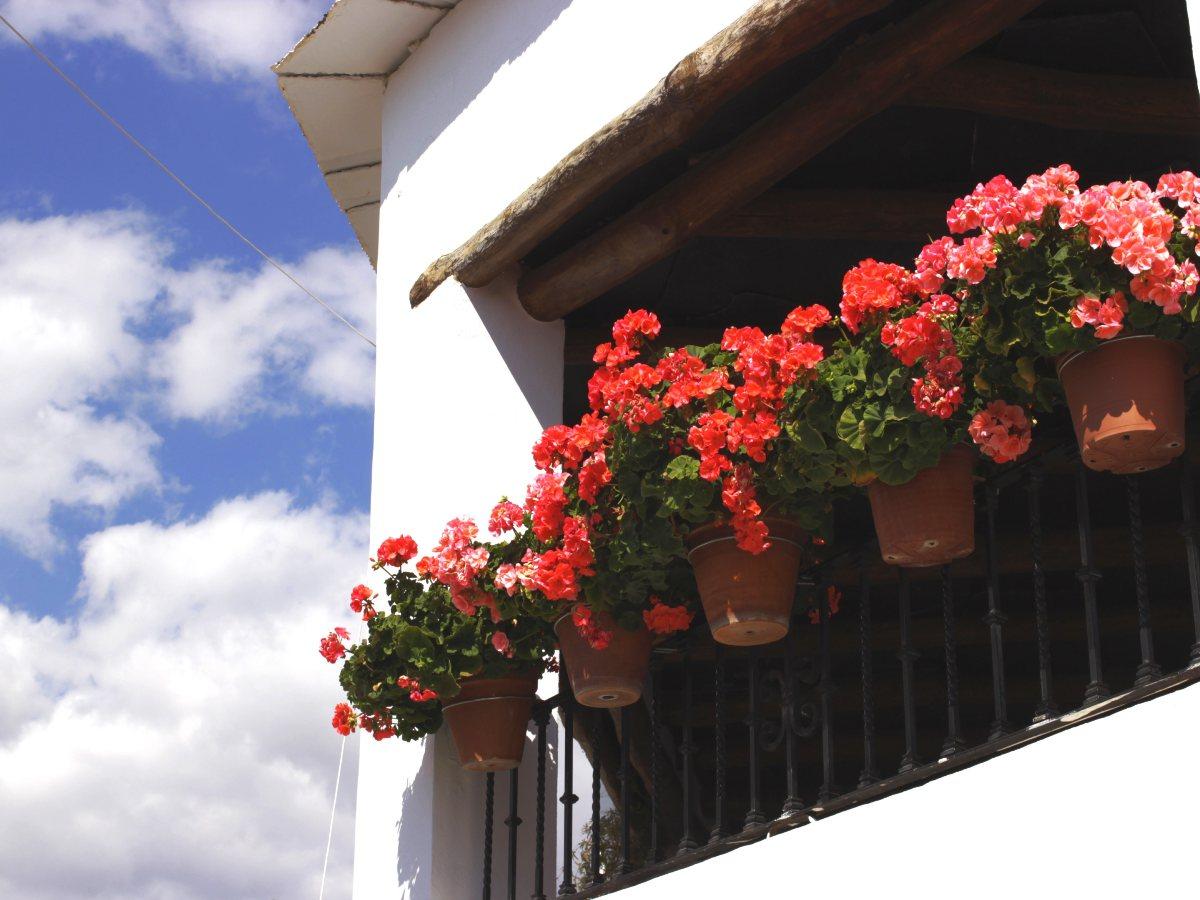 Flowers in Alpujarras (Spain)