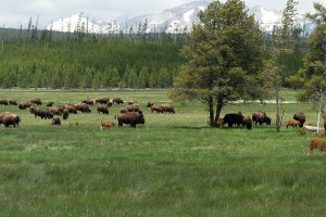 Yellowstone and Grand Teton Hiking Tour