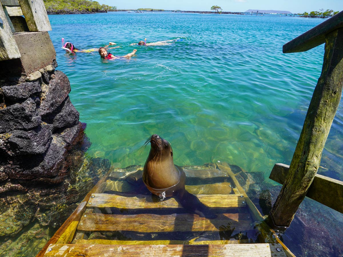 Tropical ocean swimming with sea lions seals