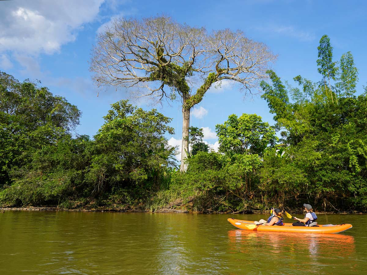 Exploring ricer rainforest by kayak
