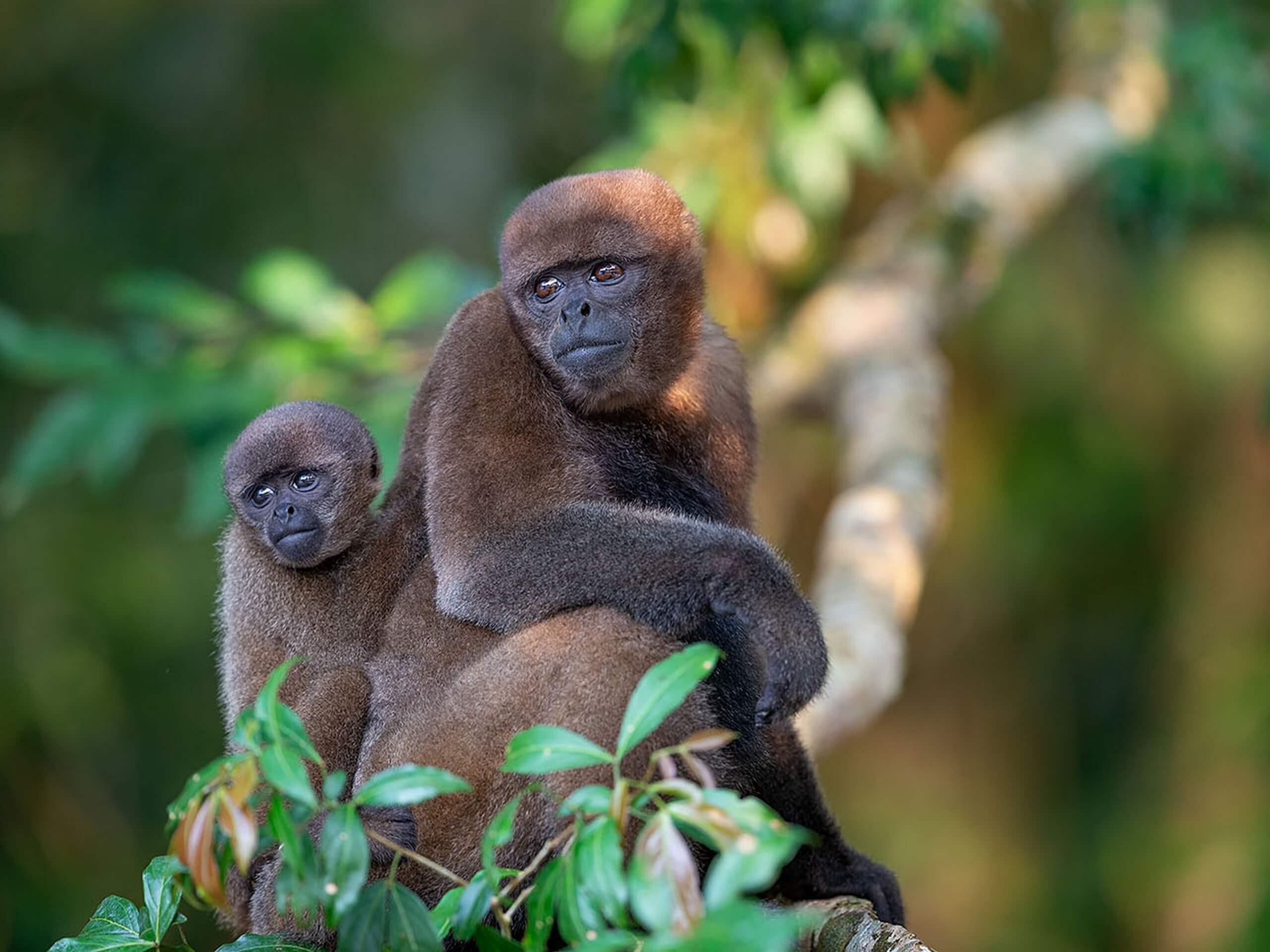 Monkeys seen while on biking tour in Ecuador rainforest