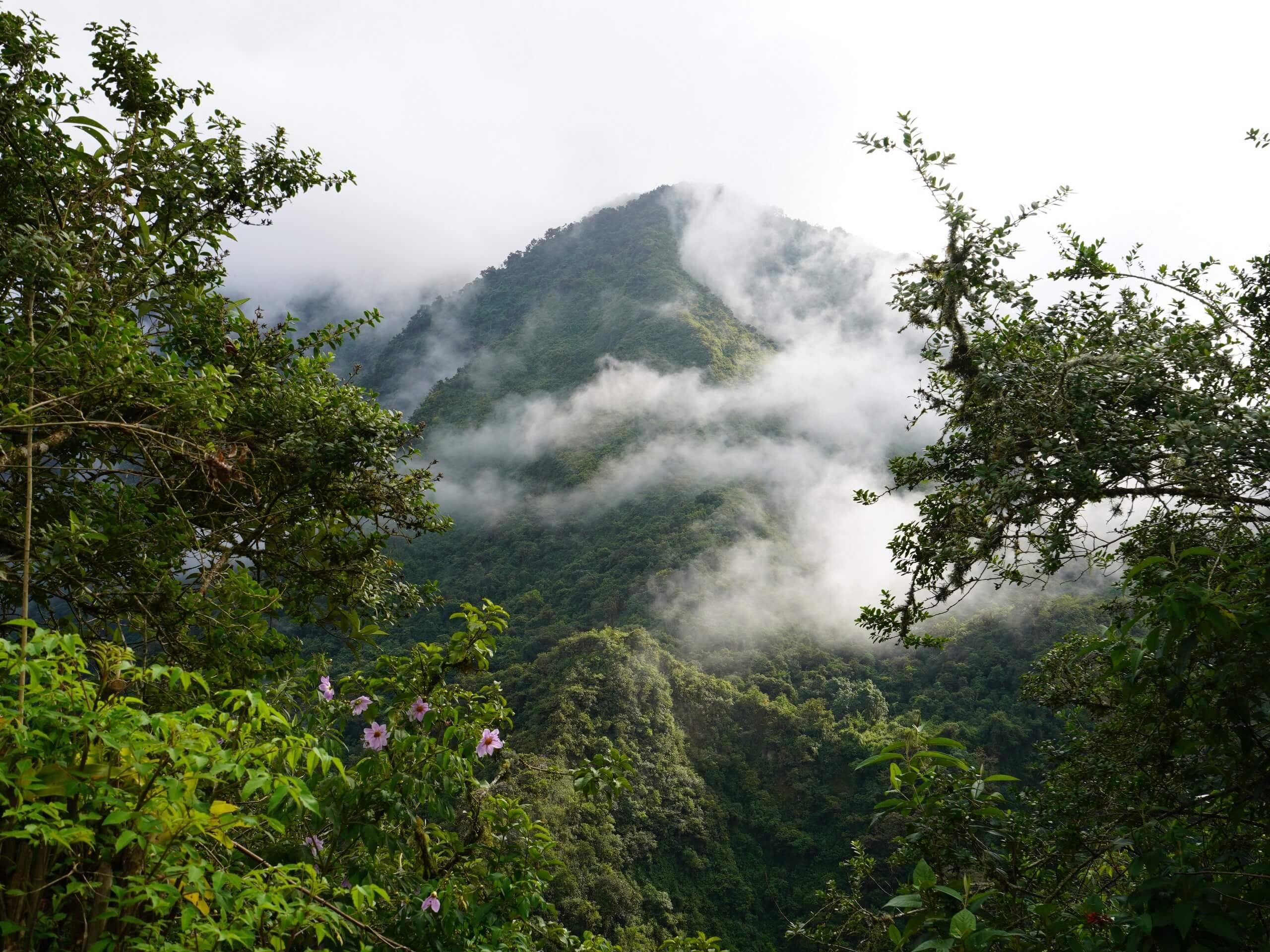 Ecuador rainforest views