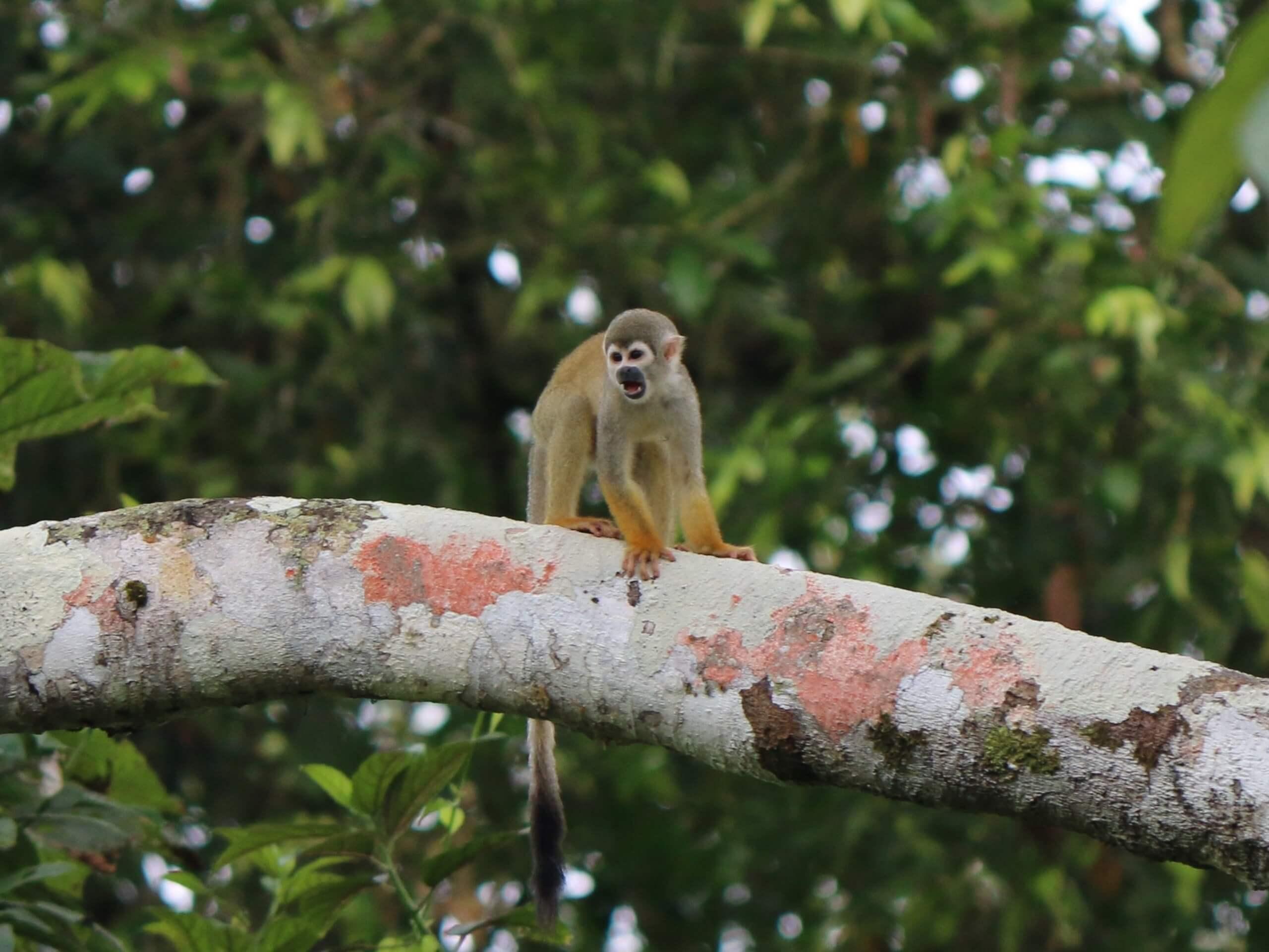 Monkey met in Ecuador during the biking tour