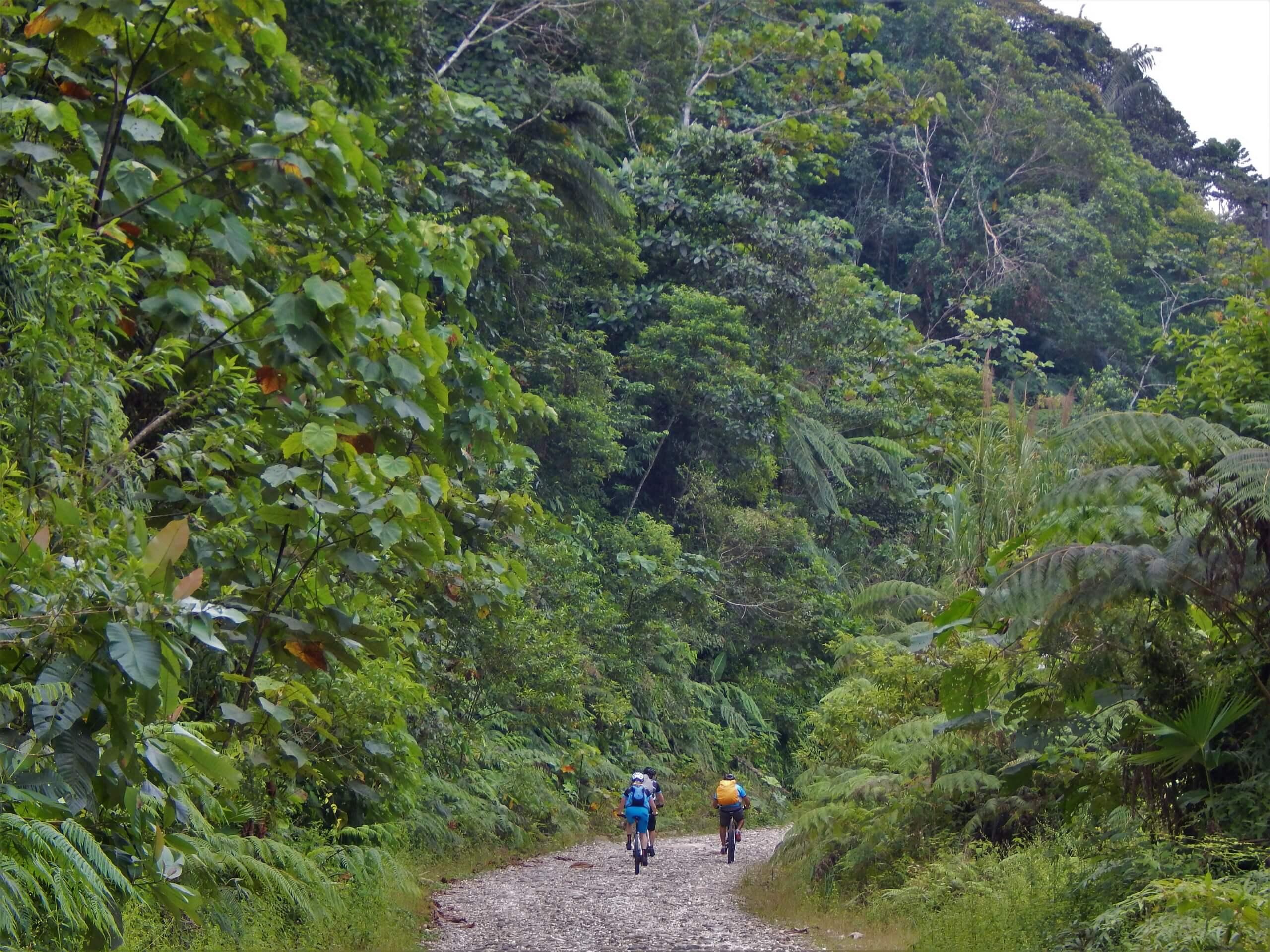 Biking through the lush rainforest in Ecuador