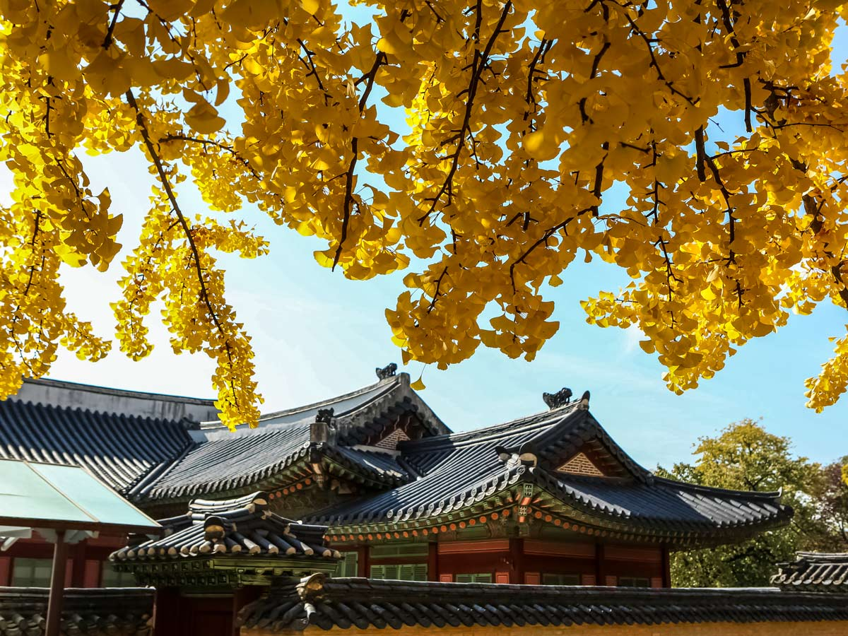 Gyeongbokgung palace South Korea soft adventure tour