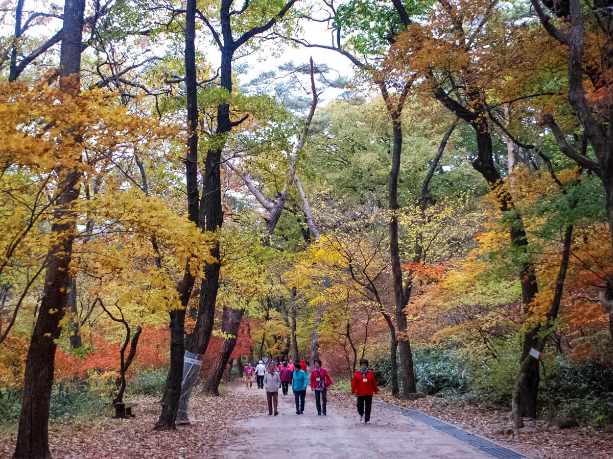 Walking through the park fall South Korea soft adventure tour