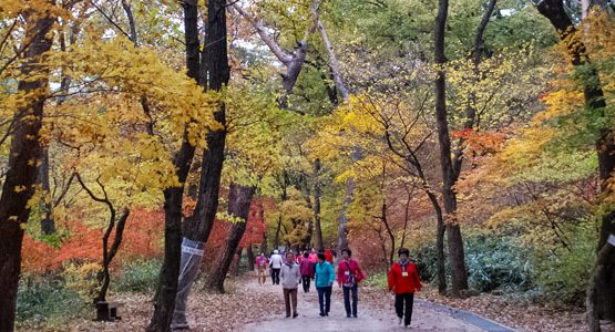 Adventure and Culture in South Korea Tour