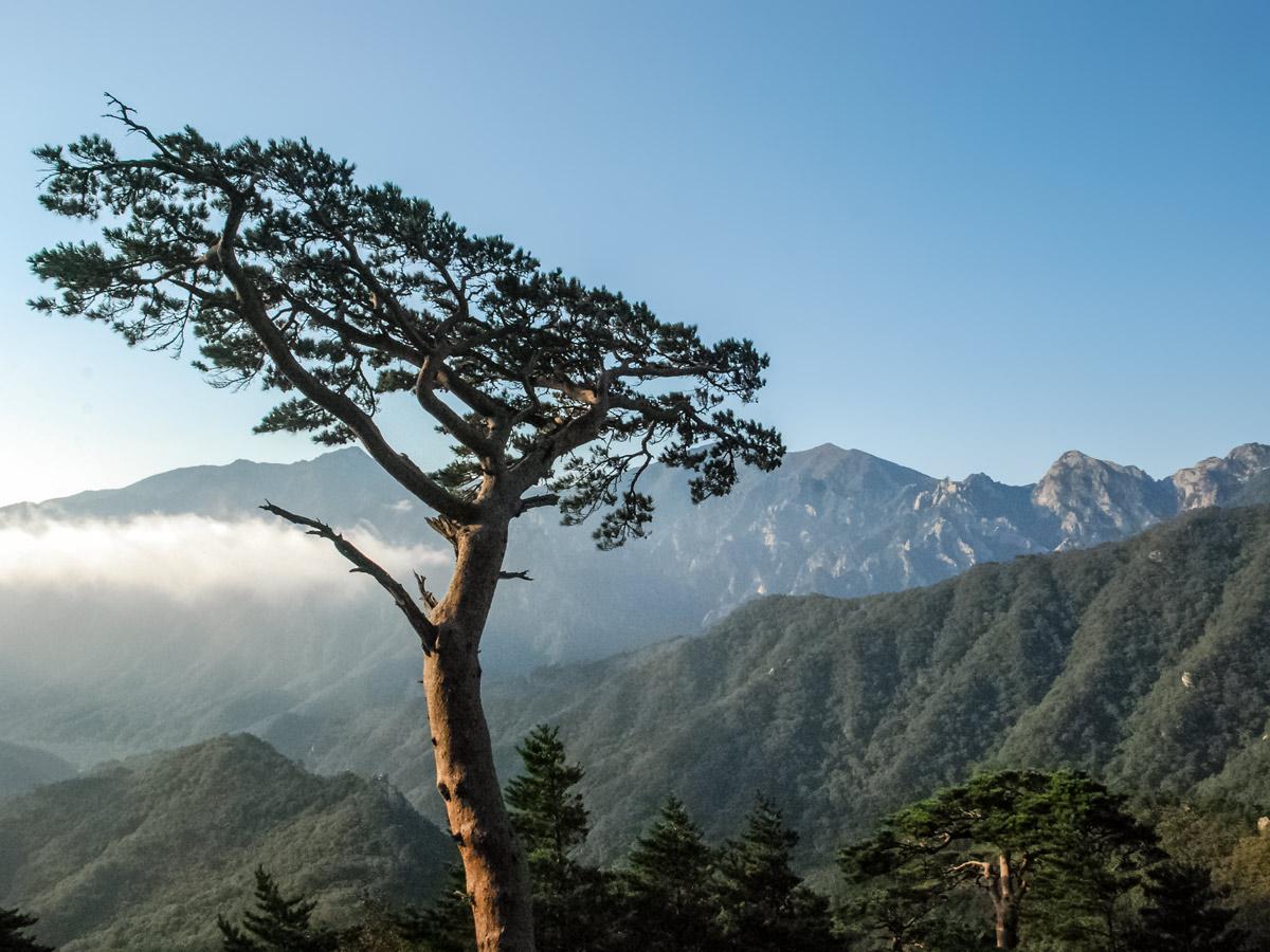 Unique trees mountains exploring South Korea adventure tour