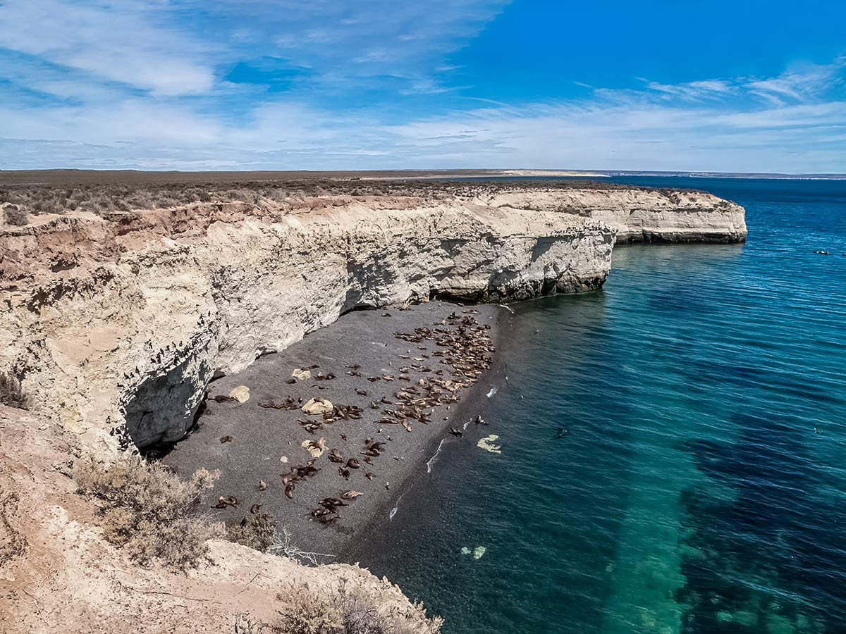 Peninsula Valdez seals sea lions wildlife beach Valdez Patagonia Chile