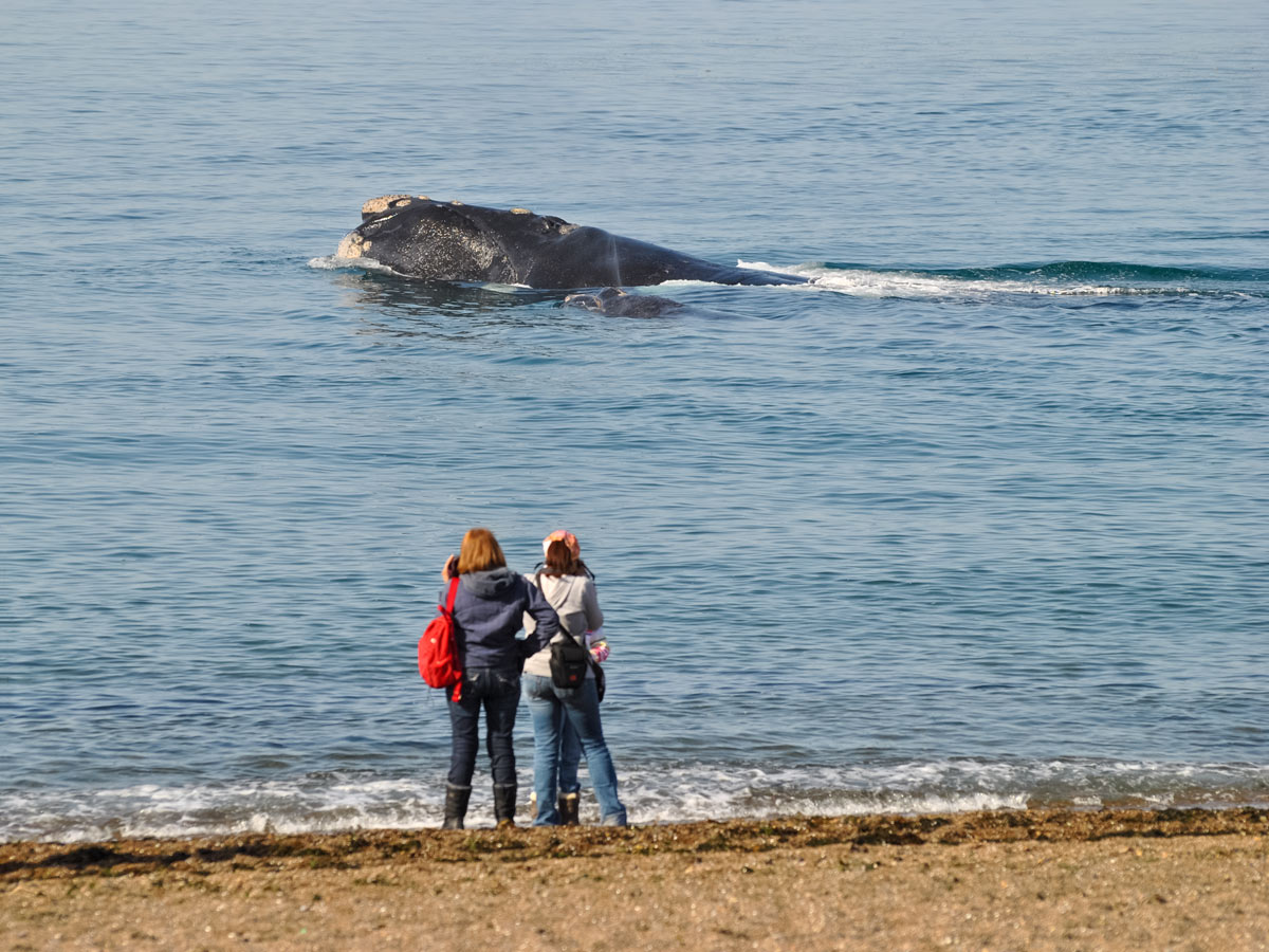 Whale watching from the beach Valdez Patagonia Chile adventure tour