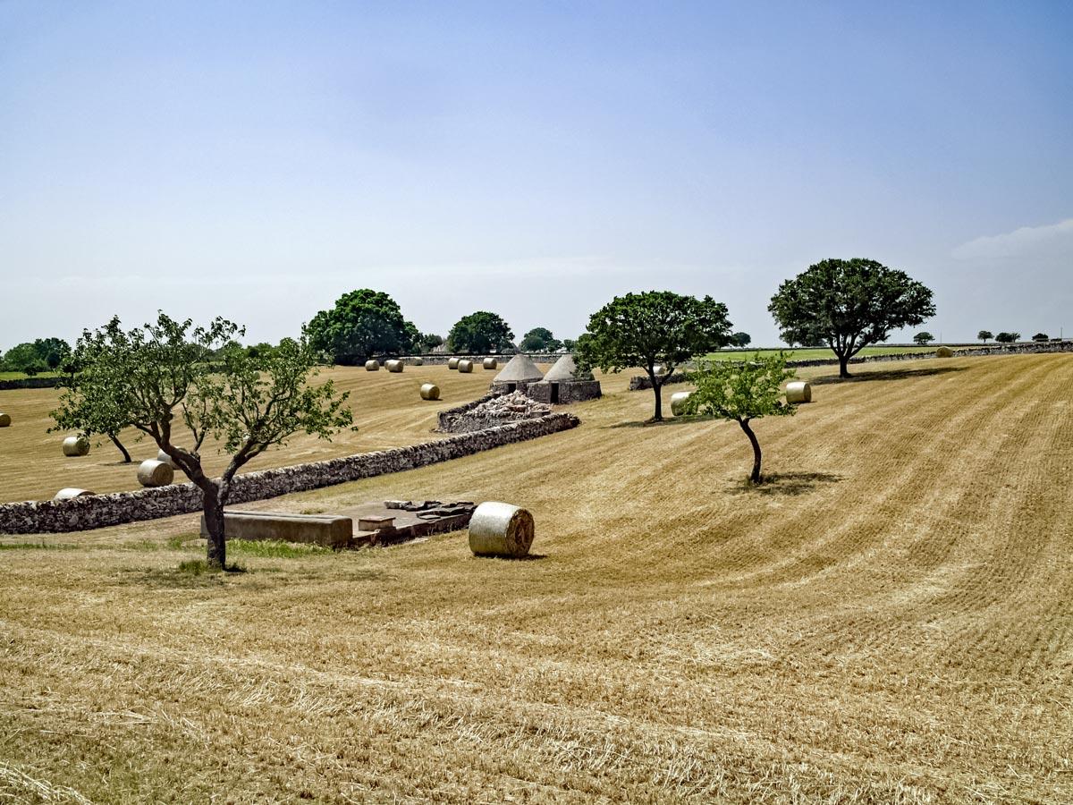 Alberobello hay fields farmland
