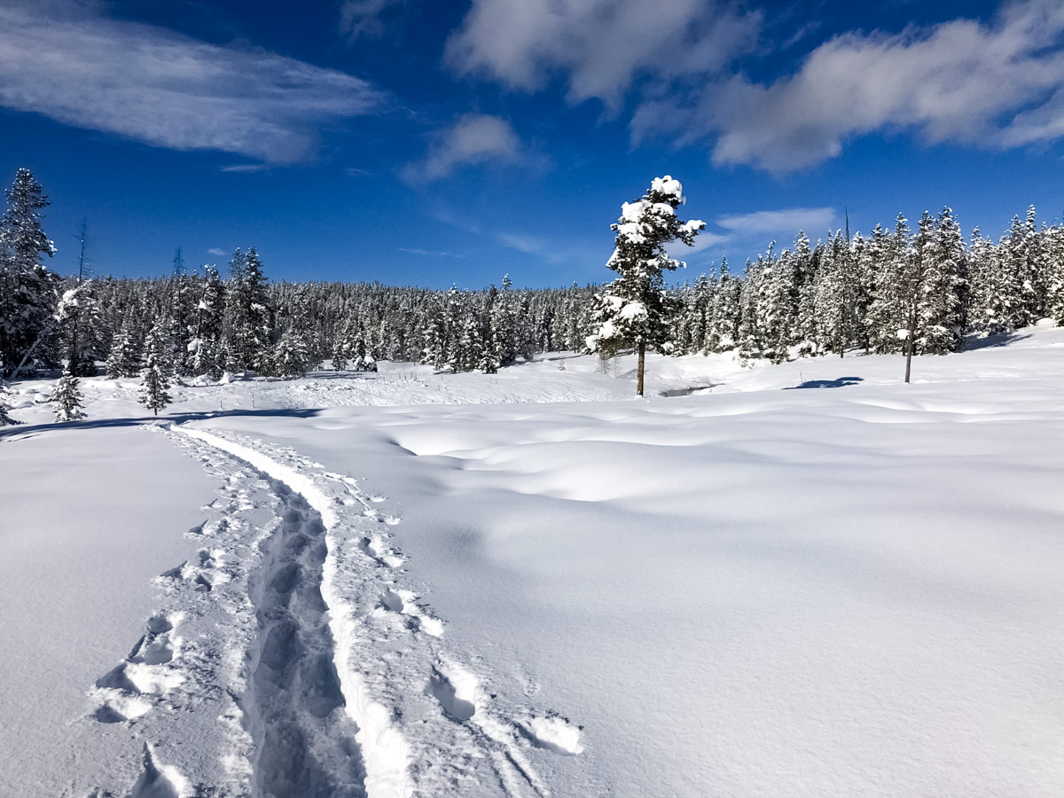 Yellowstone snow FlaggRanch meadow snowshoe adventure tour Yellowstone National Park USA