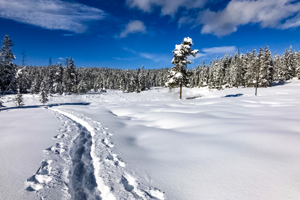 Yellowstone Snowshoe Adventure
