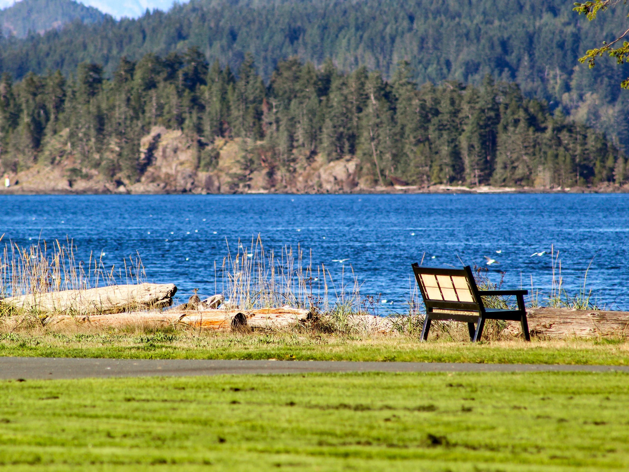 Park bench looking out ot Pacific cove on Tyee Spit Campbell River