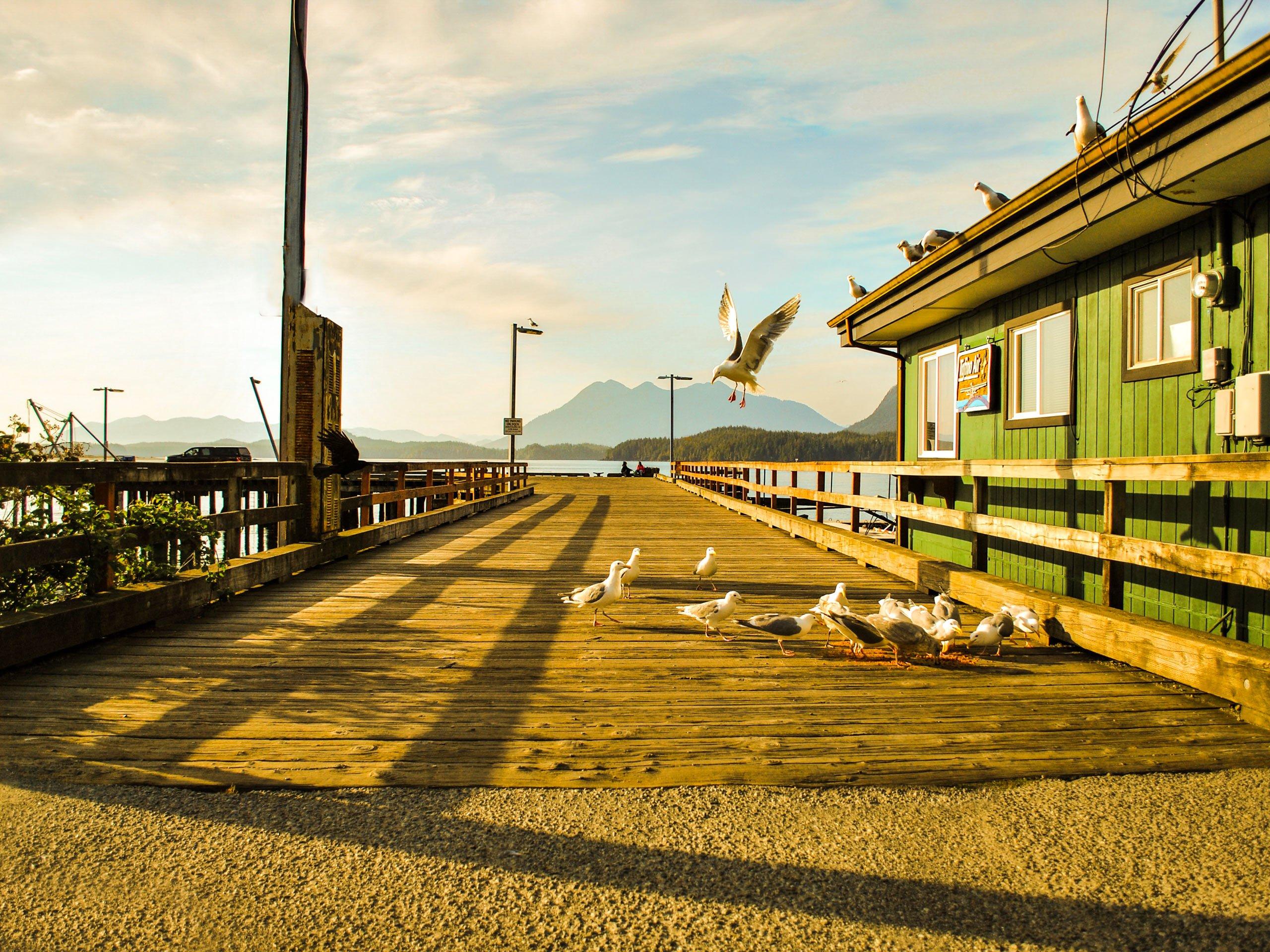 Seagulls on the pier in Tofino
