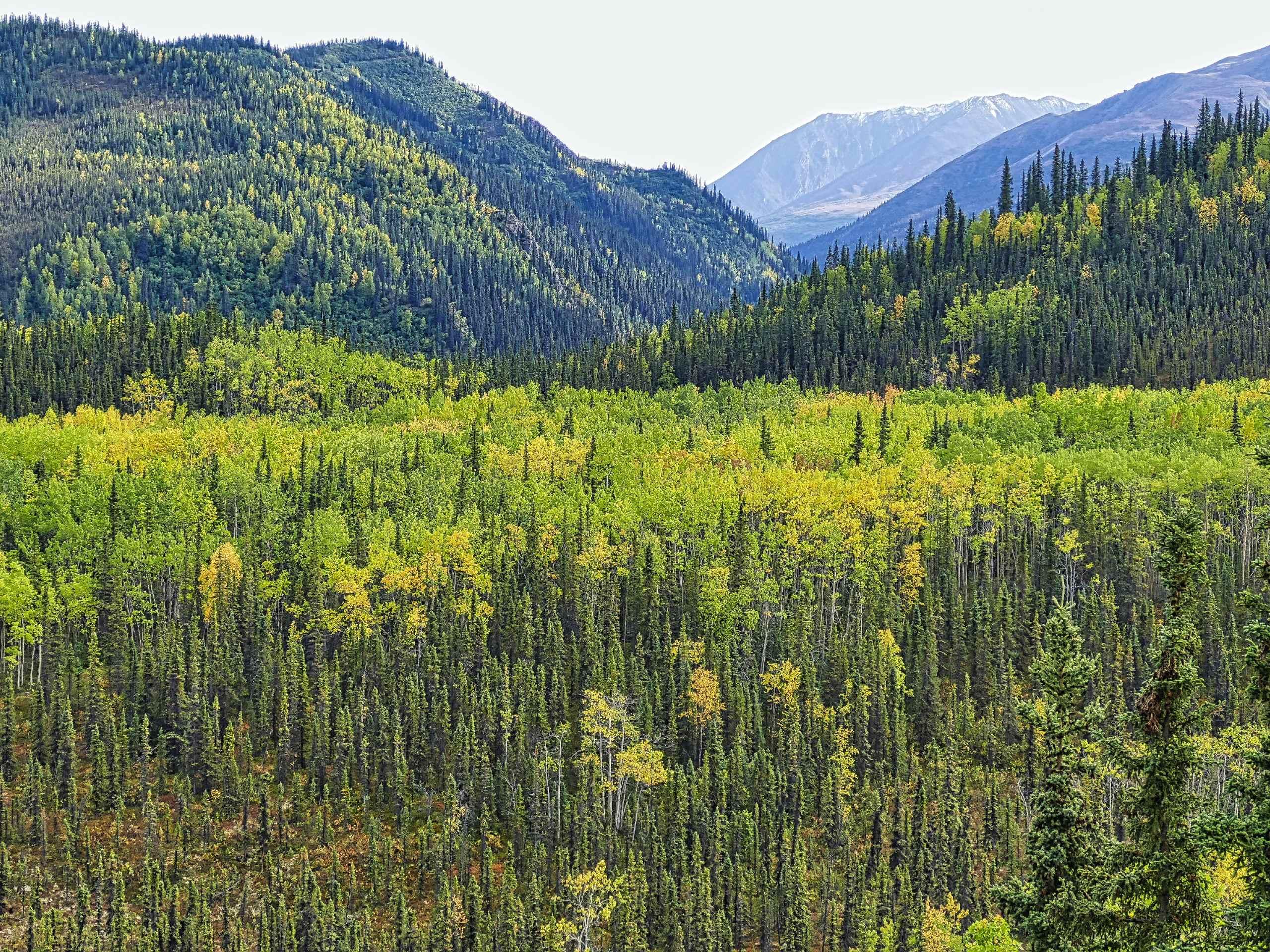 Forests in Alaska