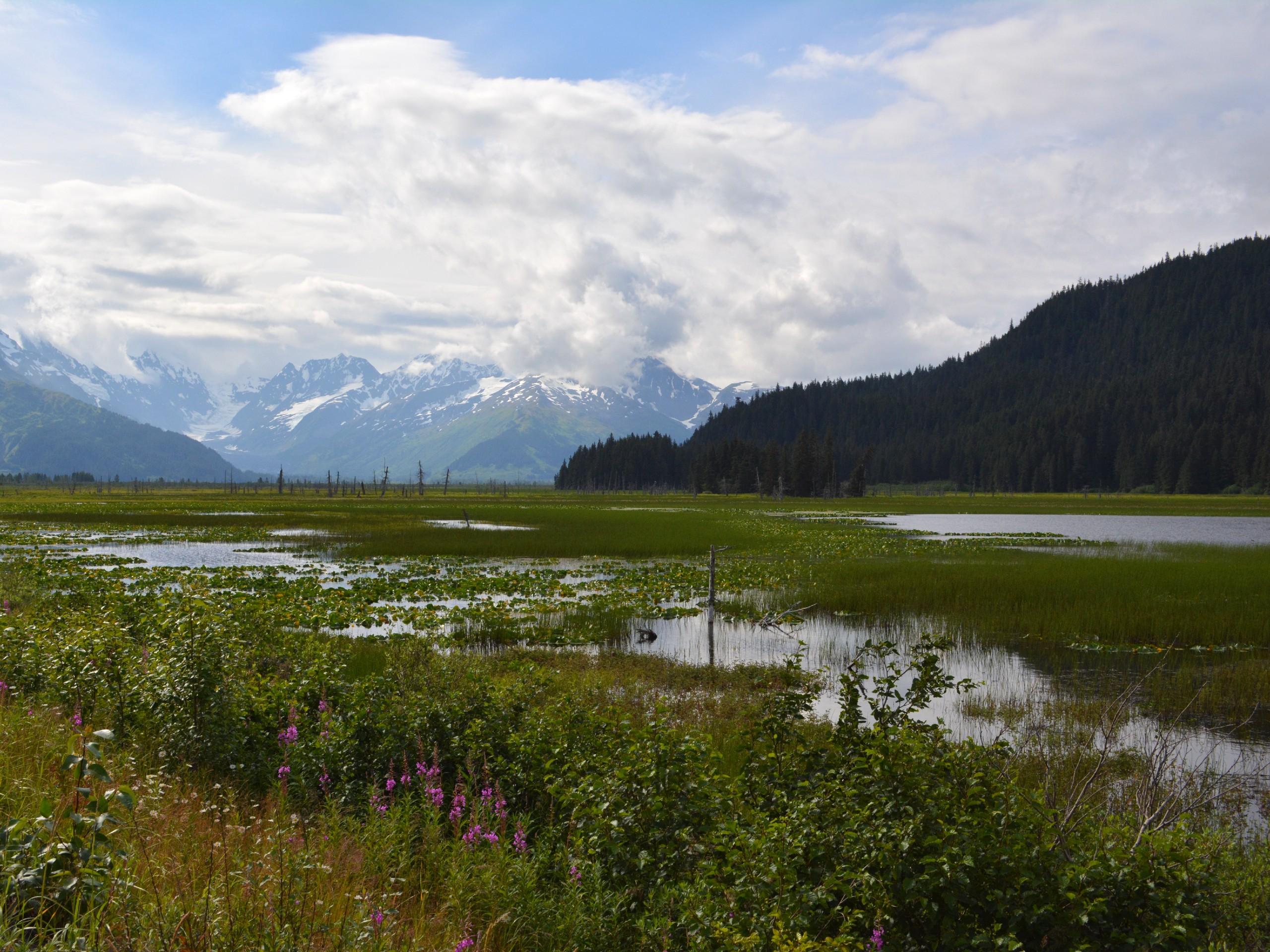 Kenai Peninsula views