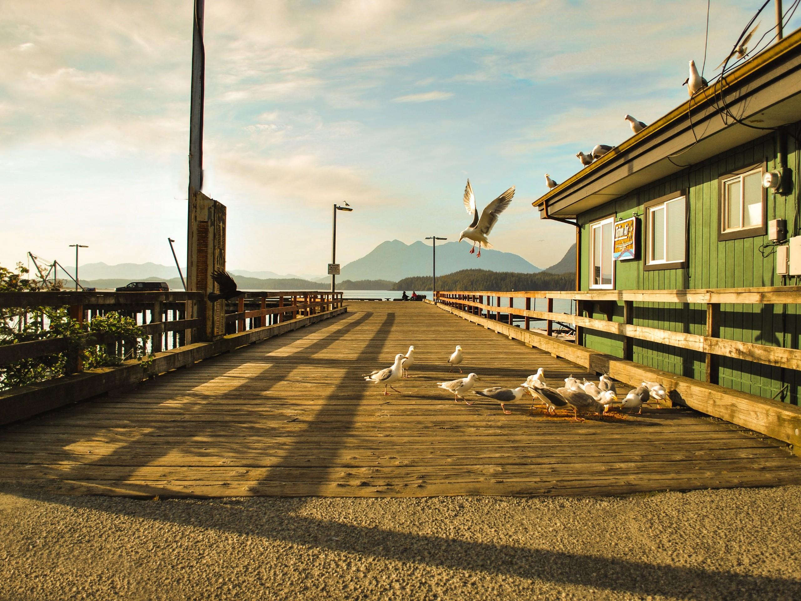 Small pier at Tofino