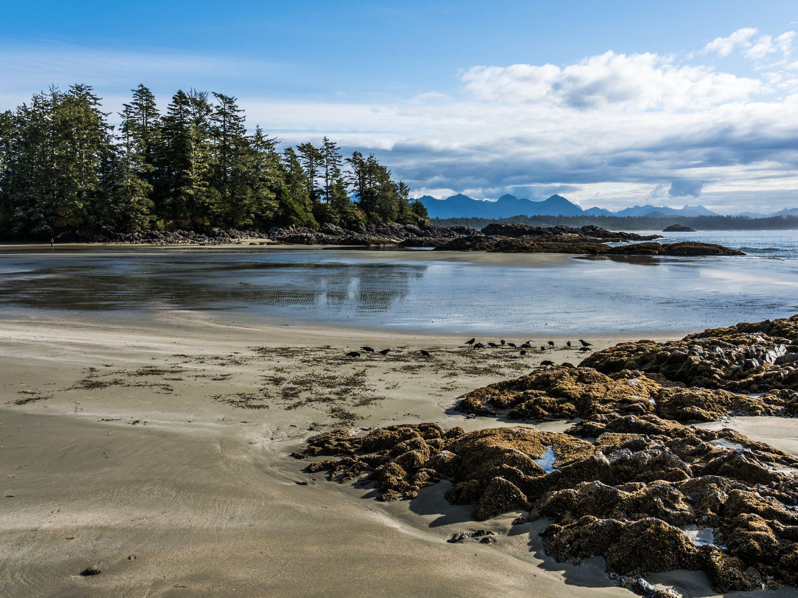 Beach at Tofino (BC)