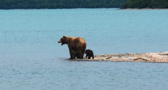 Alaskan Bear Adventure