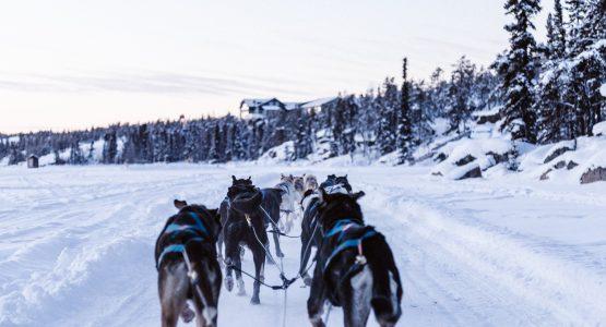 Yukon Dog Sledding Expedition