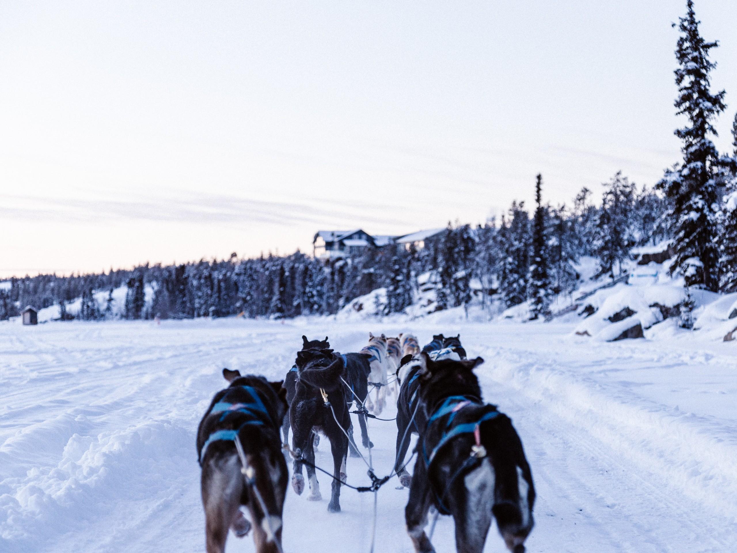 Dog sledding in Yukon is a wonderful winter activity