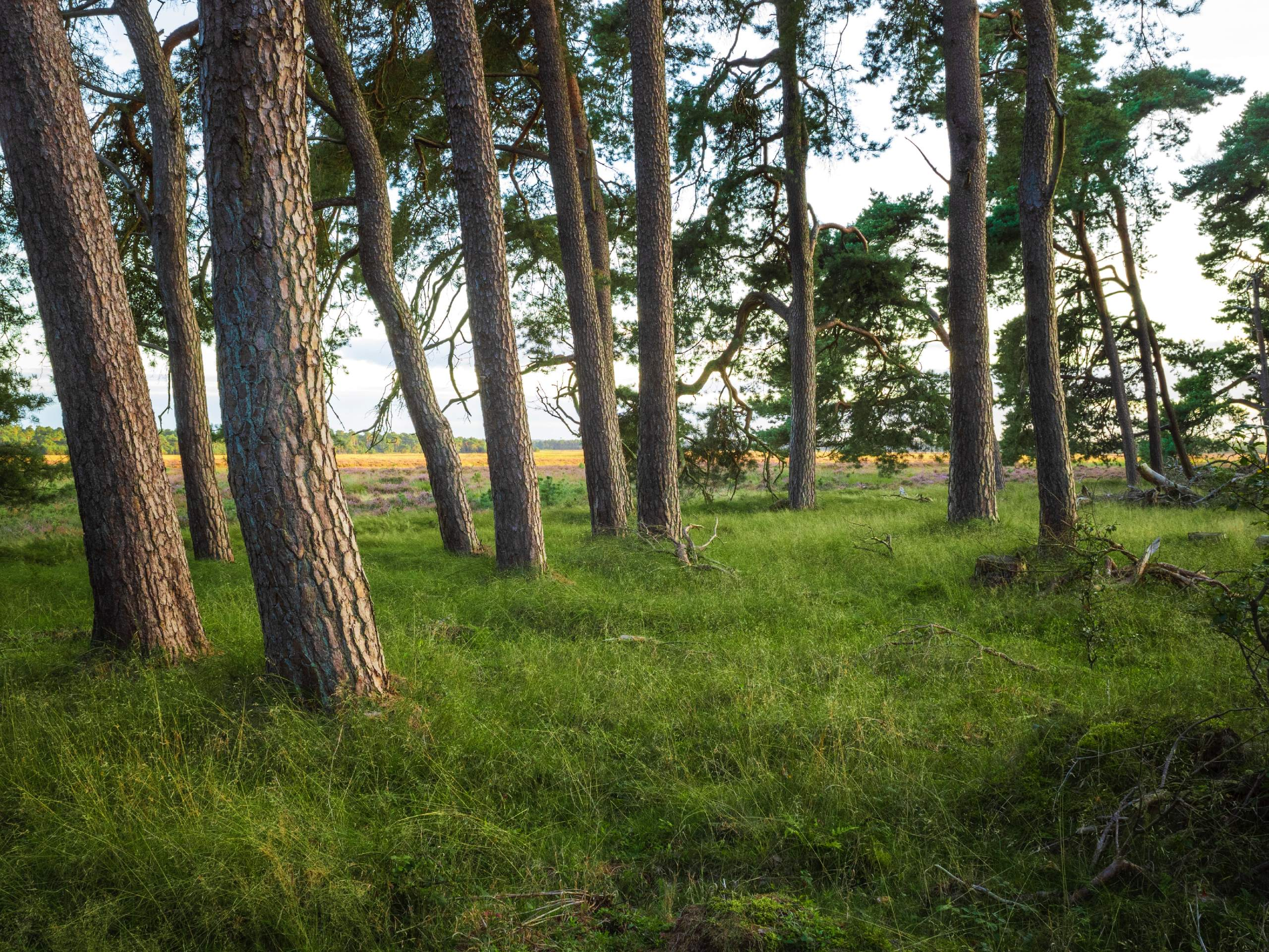 Trees along the biking route of the self-guided biking tour in Netherland