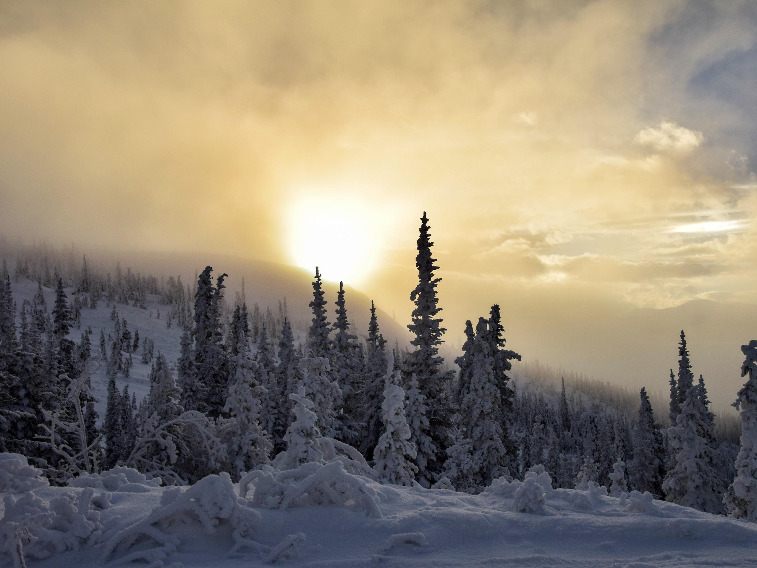 Winter in Yukon (snowy trees in Kluane)