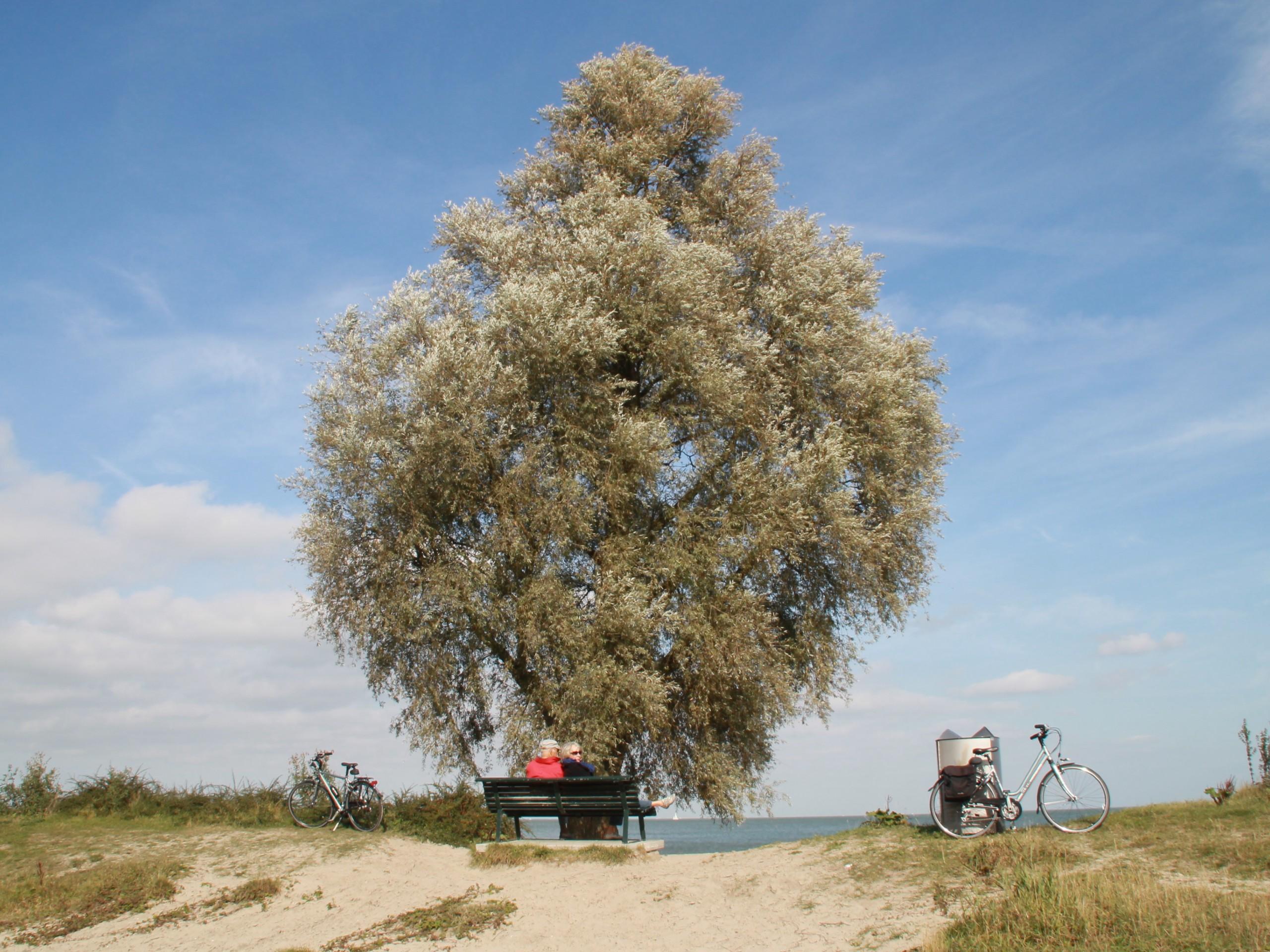 Lone tree near Zuiderzee