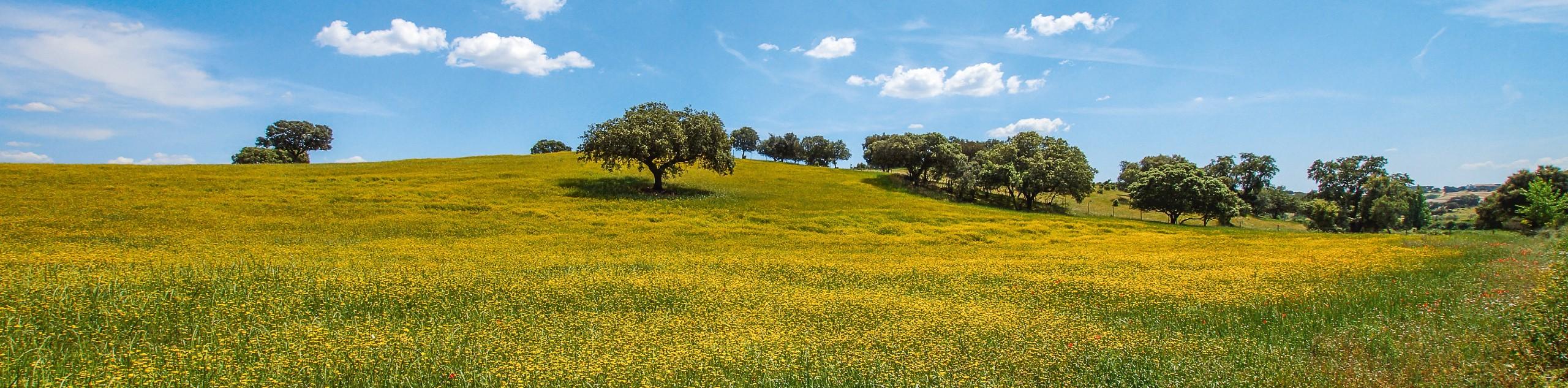 Alentejo and the Algarve Cycling Tour