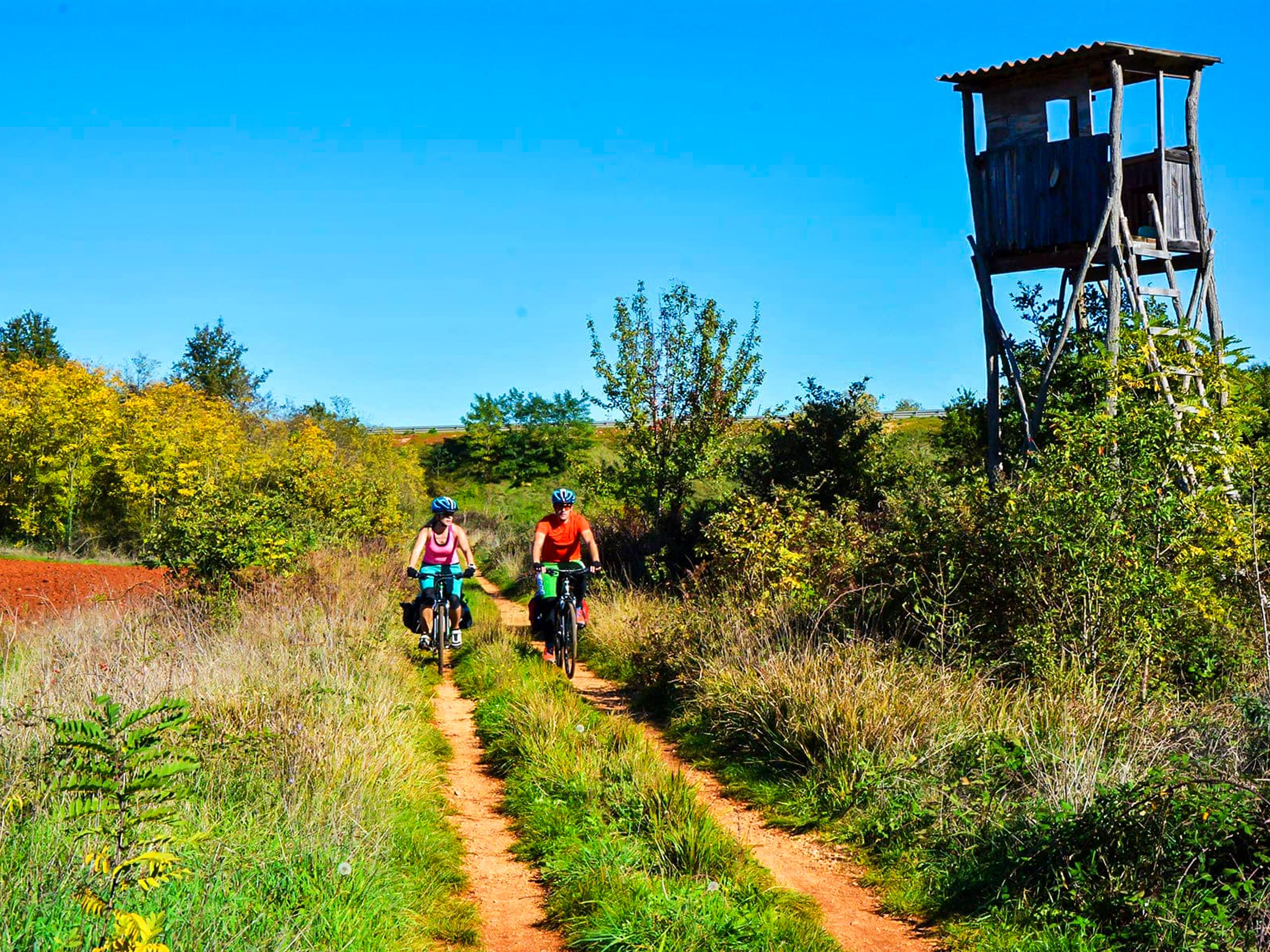 Forest cycling