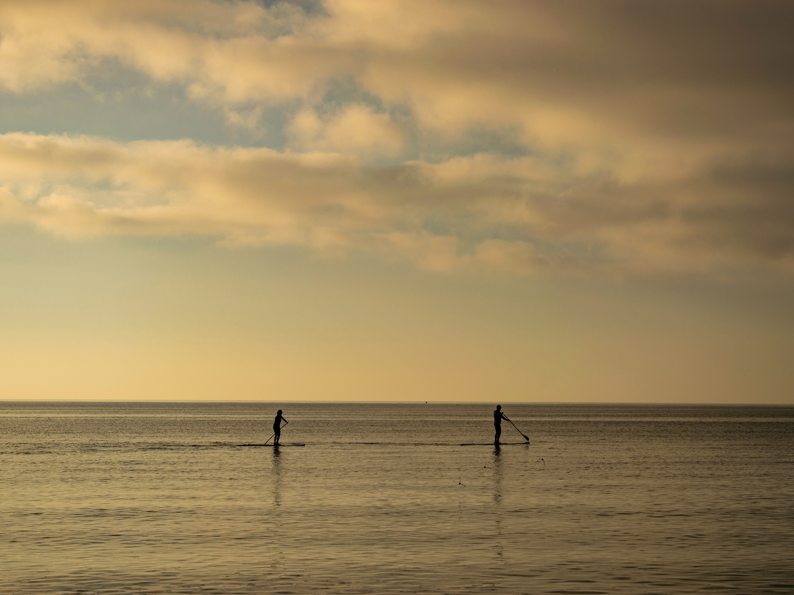 Paddleboards on the sea in Tofino