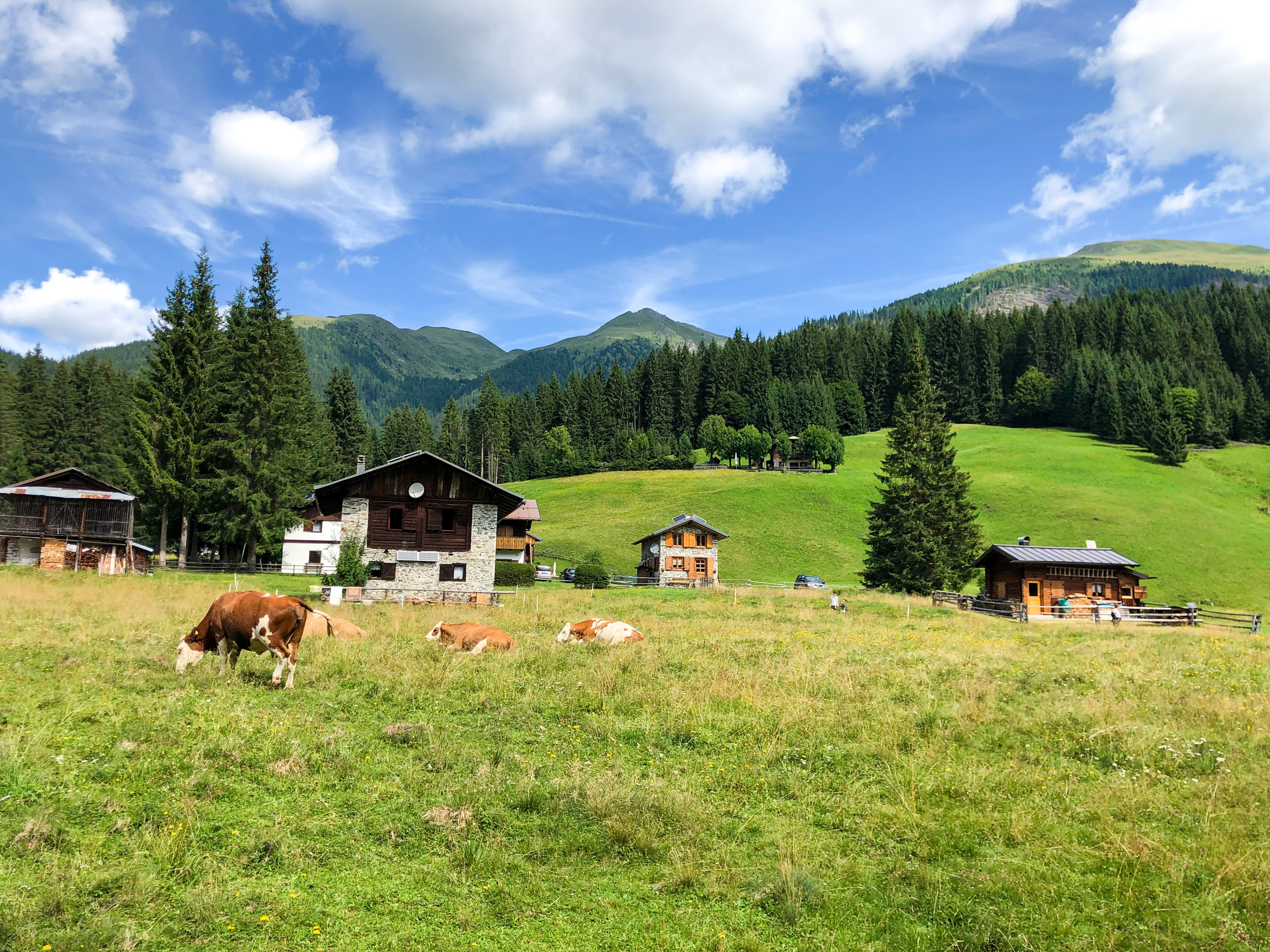 Cows in a mountain village