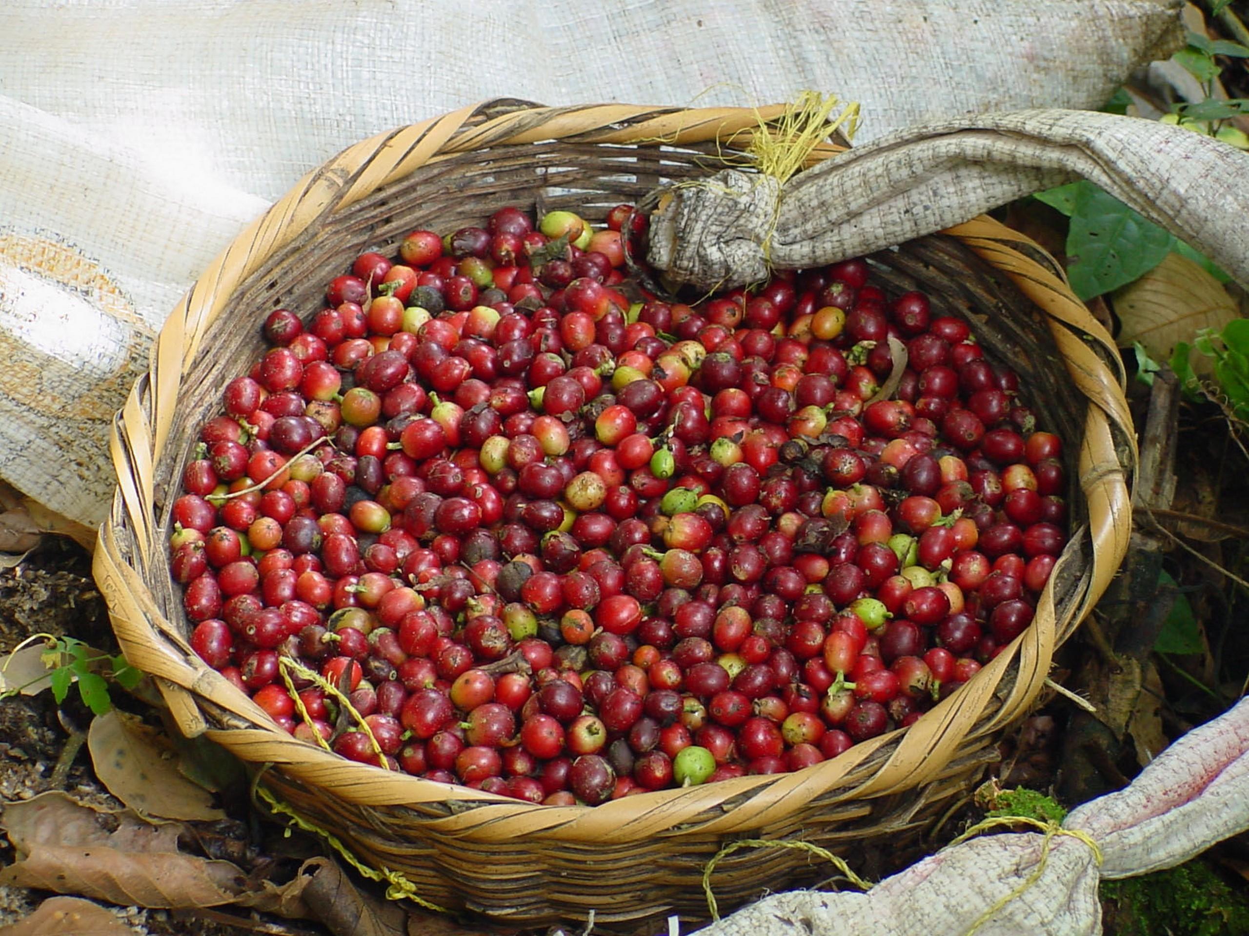 Coffee (Nicaragua)